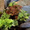 Thumbnail image for Learn How To Make (And Win) A Terrarium