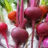 Thumbnail image for Growing Beets in the Garden