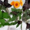Thumbnail image for Six Basil Varieties to Try