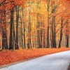 Thumbnail image for Fall Feng Shui Advice for Your Home