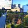 Thumbnail image for The High Line Takes Root in New York City