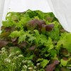 Thumbnail image for How to Grow Vegetables All Year Long (Even in Winter!)
