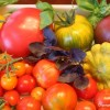 Thumbnail image for A Quick Guide to Growing Healthy Tomatoes