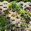 Thumbnail image for Vertical Succulent Garden Saves Space, Looks Great