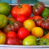 Thumbnail image for Tomato Tips