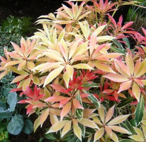 Post image for Part V: Favorite Winter Plants (Western Washington)