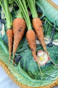 Carrots harvested straight from my garden. Photo by Isabel Gomes.