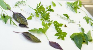 Post image for Harvesting and Preserving Herbs