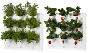 vertical gardens for herbs and strawberries.
