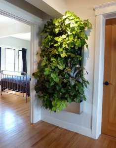 Indoor living wall -- floraframe system for vertical garden