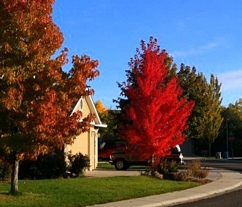 fall trees with red leaves. Why Leaves Change Color  ... 22d79ba93878