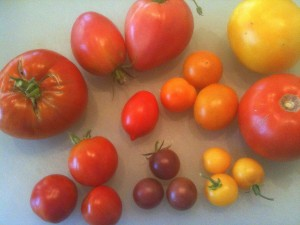 Stupice, black cherry, sungold, lemon boy and glacier tomatoes.