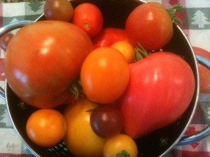 Beefsteak tomatoes, cherry tomatoes, and other varieties
