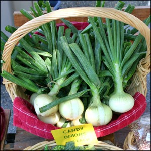 onions in basket at farmers market