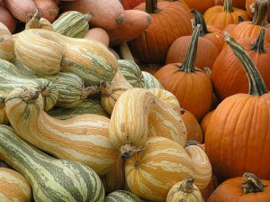 pumpkins and winter squash in a pile at farmer's market