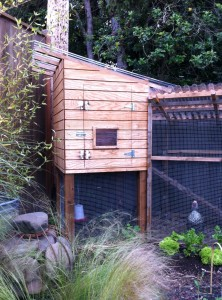 wood chicken coop and chickens