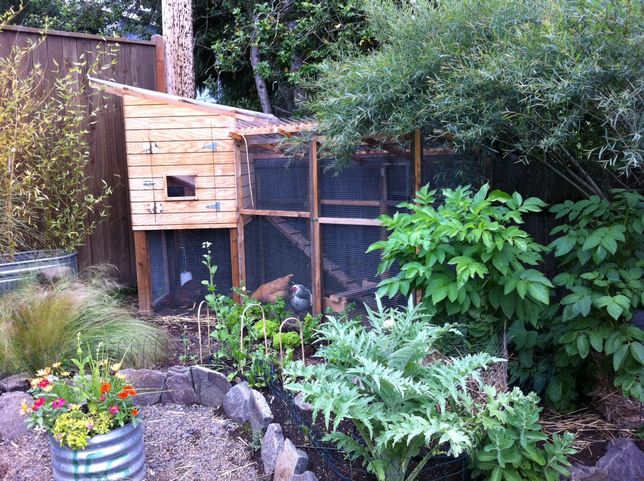 Beau Chicken Garden