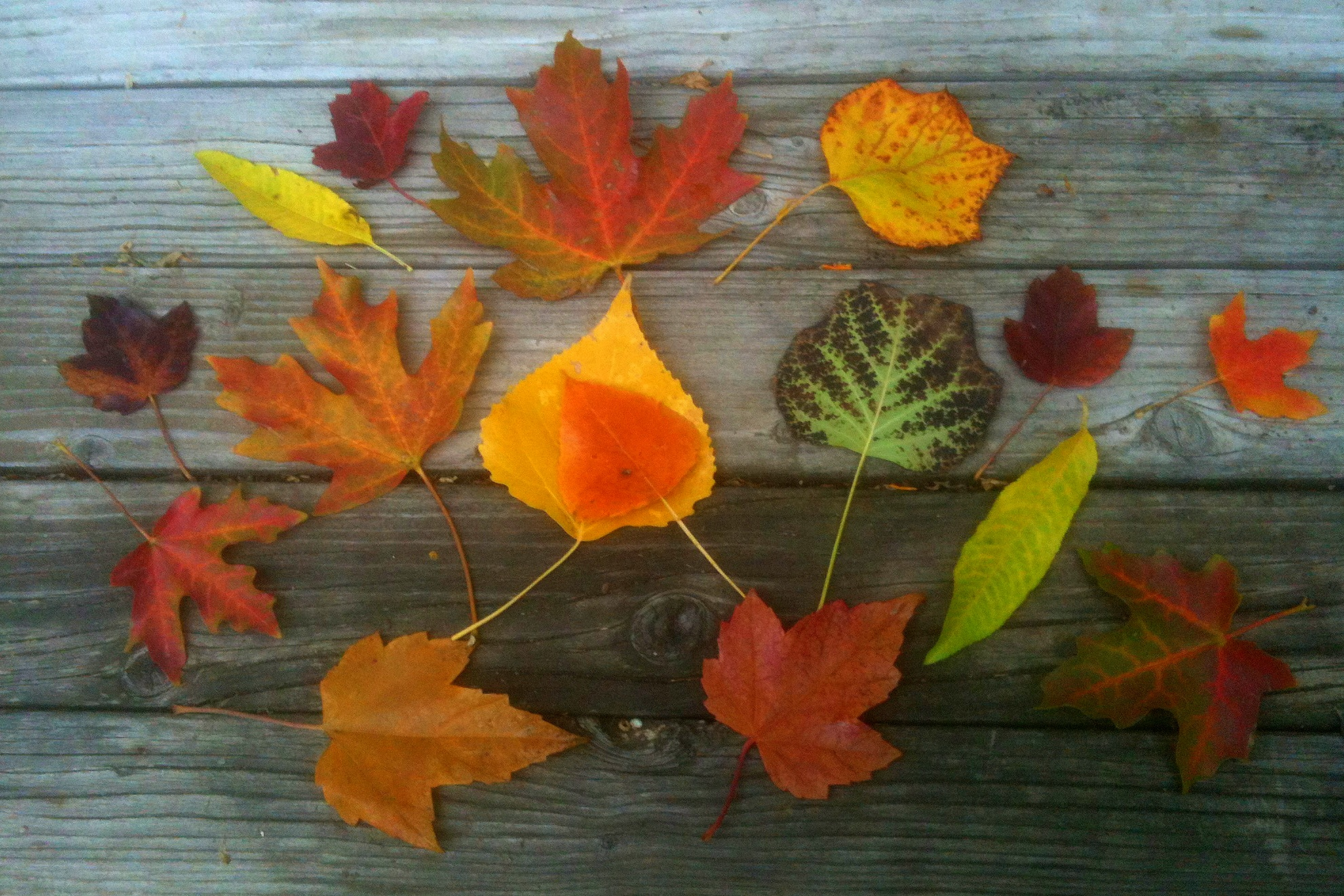 How to Use Fall Leaves in Garden