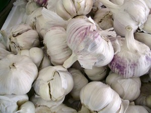 many garlic heads shown together