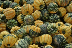 colorful winter squash