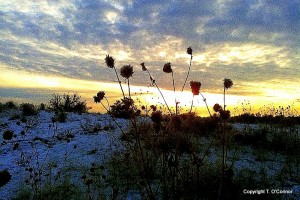 Winter sunset scene with wild flowers