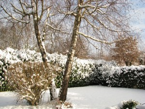 add structure to your winter garden with trees and shrubs