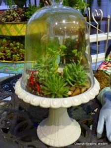 growing plants in terrariums