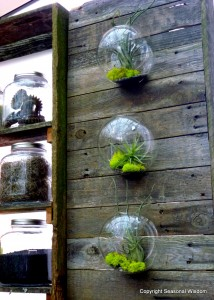 round glass terraniums