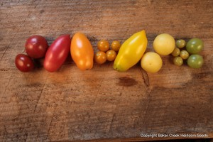 red, yellow and orange varieties