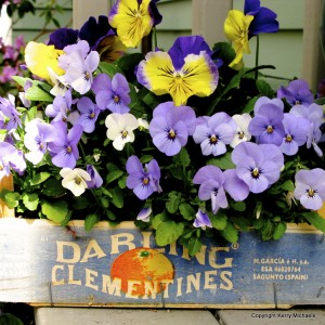 Clever container with flowers in clementine box
