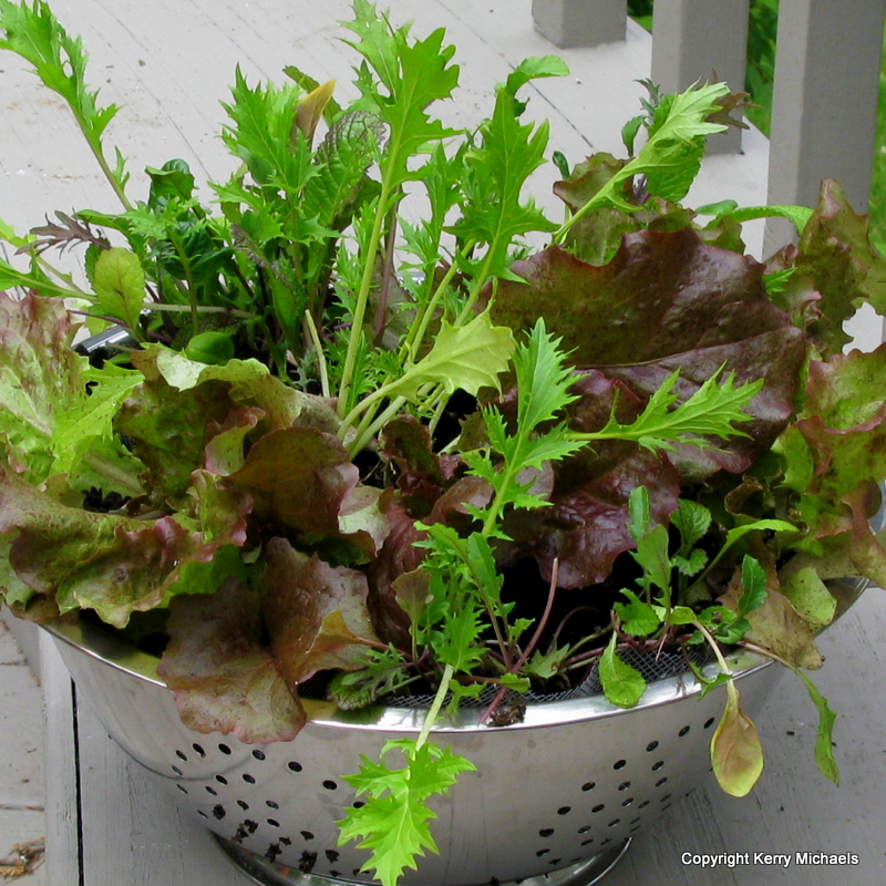 Container Gardening Resource