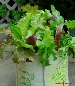 Plant salad greens in shopping bag
