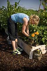 avoiding back pain while gardening