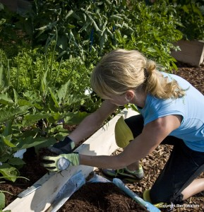 Avoid back pain in the garden