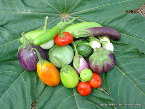 heirloom eggplants in different colors and shapes