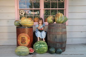 Little girl with heirloom watermelons