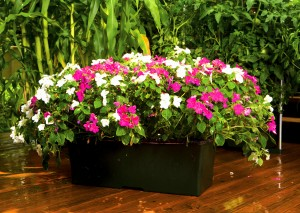 shade-loving flowers in containers