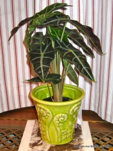 Healthy indoor plant