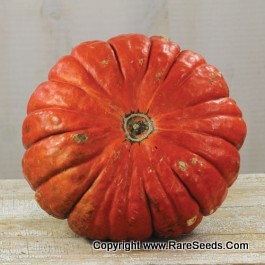 heirloom pumpkin by Baker Creek Heirloom Seeds