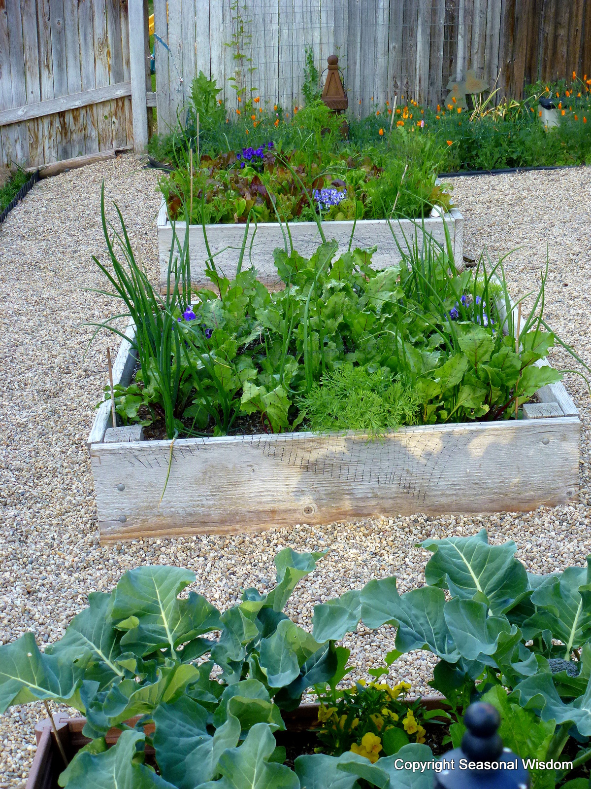 Kitchen Garden Planter 17 Best Images About Outdoors And Garden On Pinterest Gardens