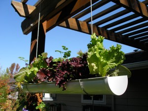 diy hanging garden design