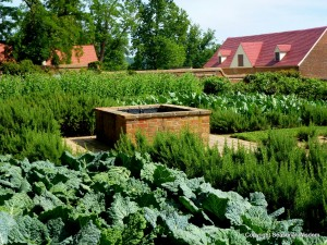 vegetables and herbs at colonial-era potager
