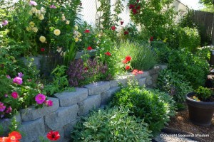 Post image for Creating a Cottage Garden