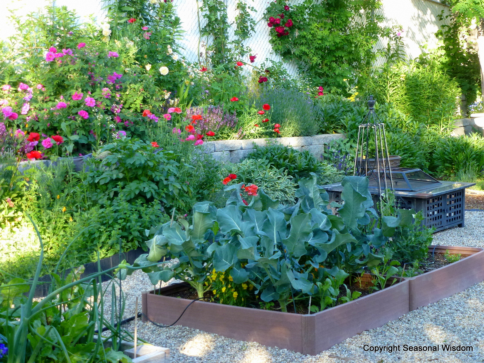 Creating a cottage garden for Cottage garden design