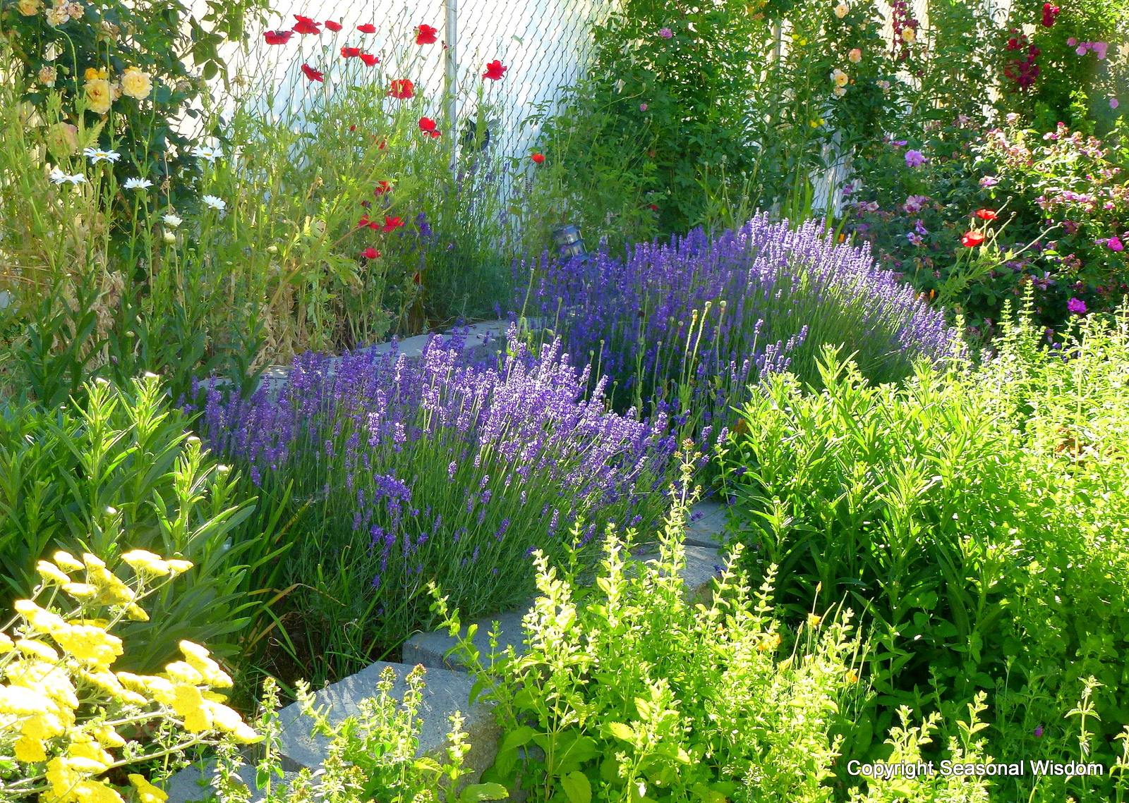 Creating a cottage garden for Designing with grasses