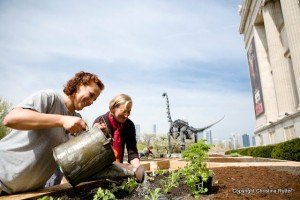 planting the edible garden with heirlooms