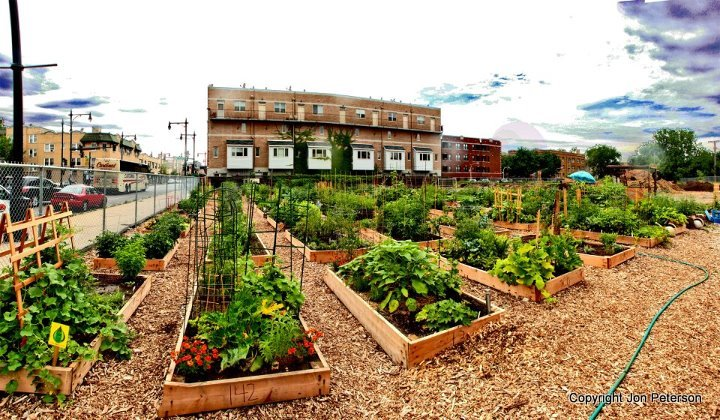 Chicago S Peterson Garden Project Built For Victory