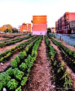 chicago community food garden