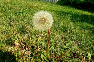 Post image for Guest Post: Fighting Weeds in Fall