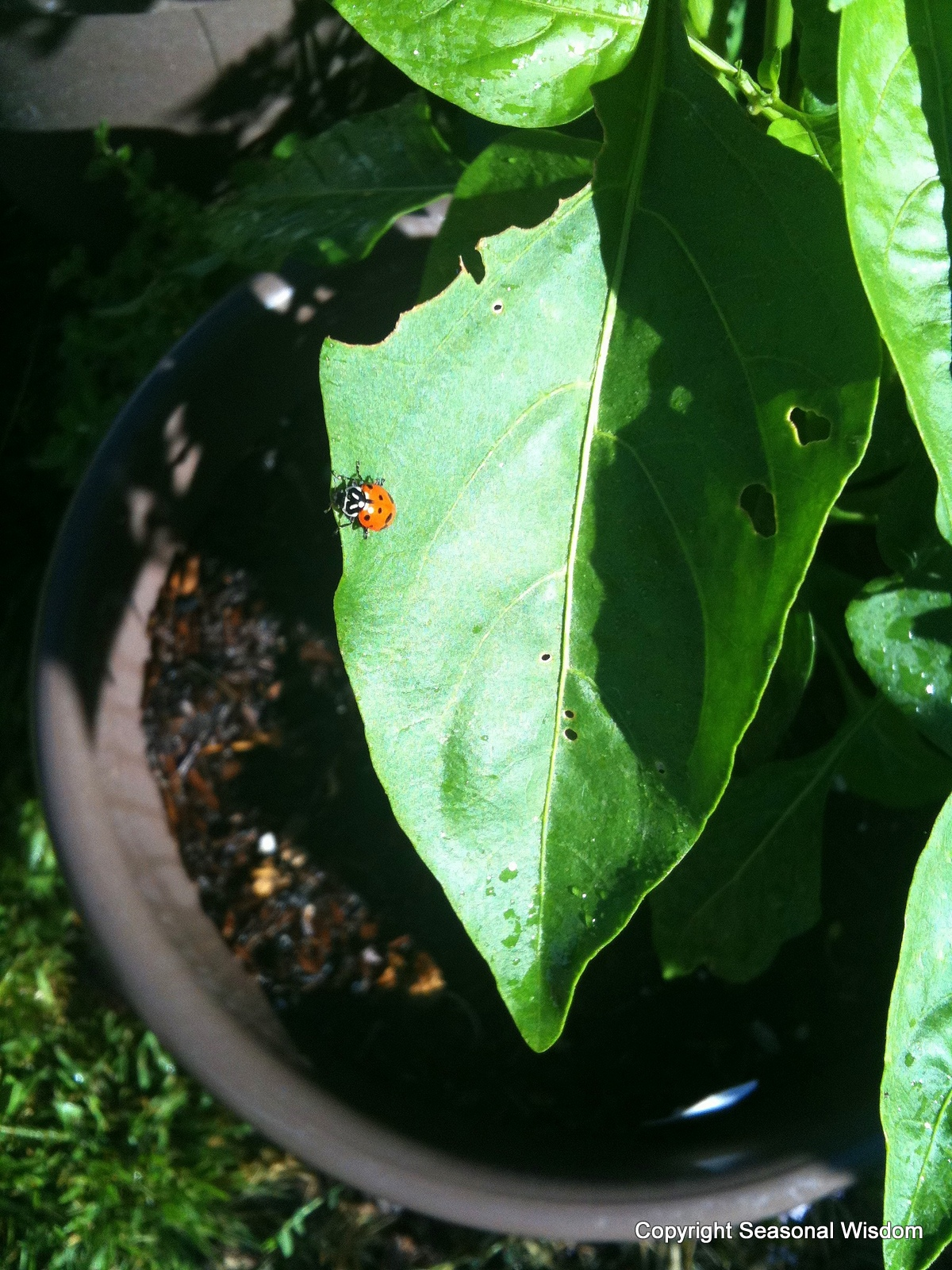 Good Garden Insects